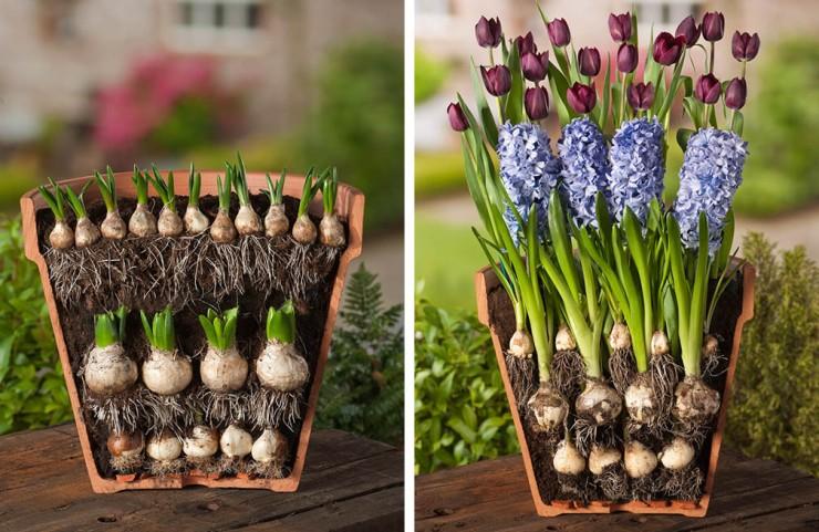 1476107819_lasagne-van-bloembollen-combinatie-tulp-hyacint_FMDB